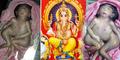 Bayi Bertangan 4 Titisan Dewa Ganesha Lahir di India