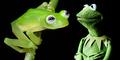 Katak Bertubuh Transparan ini Mirip Kermit