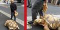 Pria Tua Ajak Kura-Kura Jalan-Jalan Layaknya Anjing