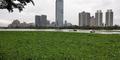 Sungai di China Berubah jadi Karpet Hijau