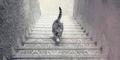 Tebak Kucing ini Naik atau Turun Tangga?