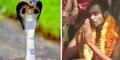 Yakin Reinkarnasi Jodohnya, Pria India Nikahi Ular Kobra