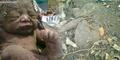 Bayi Sumbing Dikubur 8 Hari Ditemukan Selamat