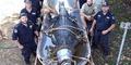 Enam Pria Australia Lumpuhkan Buaya Sepanjang 4,3 Meter