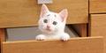Gary, Kucing Dengan Alis 'Bingung'