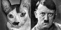 Portos, Kucing yang Wajah dan Kelakuannya Mirip Hitler