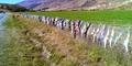 Ribuan Bra Tergantung di Pagar Kawat di Selandia Baru