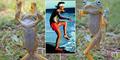 Foto Katak 'Kung Fu' Karya Fotografer di Malang Mendunia