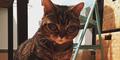 Matilda, Kucing Bermata Alien Bikin Heboh Instagram