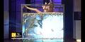 Ngeri, Karaoke di Kolam Penuh Katak, Ular Hingga Buaya