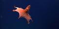 Ditemukan Spesies Baru di Laut Puerto Rico