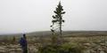 Pohon Usia 10.000 Tahun, Lebih Tua dari Zaman Nabi Nuh