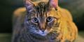 Serius, Dijilat Kucing Sebabkan Mata Buta