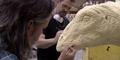 Video Keren Pembuatan Apatosaurus di Jurassic World