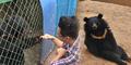 Dikira Anjing, Wang Pelihara Beruang Hitam Selama 2 Tahun