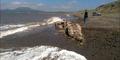 Ditemukan Monster Laut Misterius di Pantai Rusia