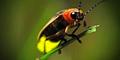 Ini Alasan Mengapa Kunang-kunang Bersinar