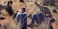 Kocak, Bule Cowok Dirayu Burung Emu Diajak Kawin