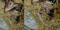 Makanan Berbuka Dicampur Kulit Ular, Pria Saudi Lapor Polisi