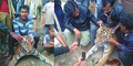 Pembunuh Harimau Sumatera Pamer di Facebook Tuai Kecaman