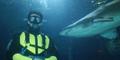 Penyelam Australia Tewas Dimangsa Hiu di Depan Putrinya