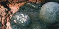 Arkeolog Temukan Telur Berusia 2.000 Tahun
