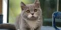 Citronelle, Kucing Berbulu Simetris Hebohkan Instagram