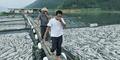 Dendam Kesumat, Lu Racuni 40.000 Kg Ikan Milik Yang