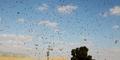 Fenomena Hujan Jutaan Semut Resahkan Warga Inggris