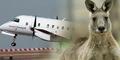 Langka, Pesawat Australia Rusak Usai Tabrak Kanguru 90 Kg
