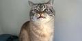 Loki, Kucing dengan Taring Layaknya Vampir