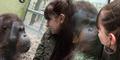 Pacar Cantik Mesra Sama Orangutan, Andrew Cemburu Berat