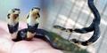 Ular Kobra Langka Berkepala 2 Ditemukan di Tiongkok
