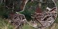 Ngeri, Pendaki Australia Dibuntuti Hantu Bunuh Diri