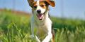 Gara-gara Anjing, Anggota Brimob Pukuli Bocah Sampai Trauma