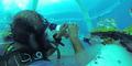 Nemo Garden, Perkebunan Bawah Air Pertama di Dunia