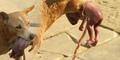 Anjing di Saudi Selamatkan Bayi Dibuang di Tempat Sampah