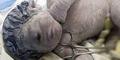 Bayi 'Cyclopia' Bermata Satu Tanpa Hidung Lahir di Mesir