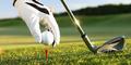 Bolos Buat Main Golf, Wali Kota Tiongkok Dipecat