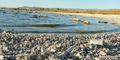 Danau Terkontaminasi, Jutaan Ikan Tewas Jadi Pasir