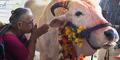 Dikabarkan Sembelih Sapi, Muslim India Dibunuh Warga Hindu