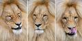 Leon, Singa Berambut Belah Tengah Ala Boyband