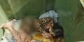 Mayat Wanita Bugil Ditemukan Tengkurap di Hotel Avita Asri