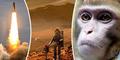Rusia Mulai Latih Monyet untuk Pergi ke Mars
