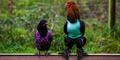 Agar Tak Mati Kedinginan, Ayam-ayam Ini Pakai Sweater Imut