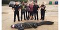 Buaya 'Godzilla' Bobot 363 Kg Nyasar di Mal Texas