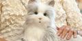 Canggih, Robot Kucing Ini Berperilaku Seperti Hewan Aslinya