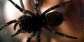 Polisi Kecele, Orang Bunuh Laba-laba Digerebek Pasukan