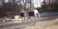 Spot, Robot Anjing Google untuk Angkatan Laut AS