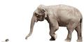 Ternyata Ini yang Membuat Gajah Takut Tikus
